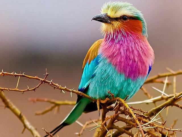 Upington Attractions | Bird Watching in Upington