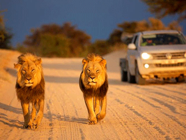 Upington Attractions | Kgalagadi Transfrontier Park