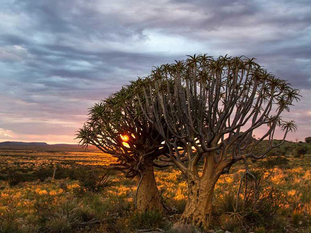 Upington Attractions | The Kokerboom Food and Wine Route